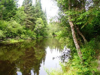 9566 county road 503, Gooderham Ontario, Canada Located on Irondale River